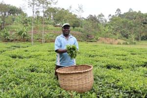 The Water Project: Shamakhokho Community, Wizula Spring -  Haron Mukati At His Tea Farm