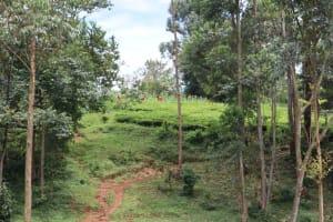 The Water Project: Shamakhokho Community, Wizula Spring -  Landscape