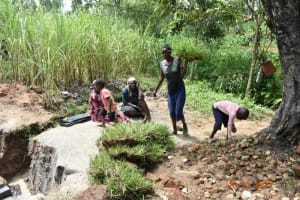 The Water Project: Mahola Community, Oyula Spring -  Delivering Sod