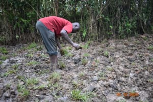 The Water Project: Mahola Community, Oyula Spring -  Planting Grass Above Catchment Area