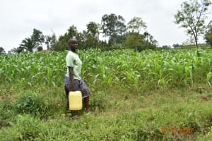 The Water Project: Mahola Community, Oyula Spring -  Water From Oyula Spring Enroute To Use