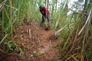 The Water Project: Mahola Community, Oyula Spring -  Digging Diversion Channels