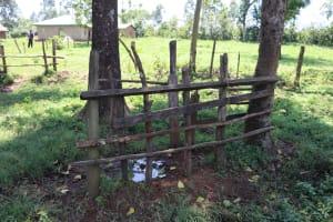 The Water Project: Shikoye Community, Kwa Witinga Spring -  Cow Milking Pen