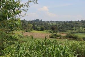 The Water Project: Shikoye Community, Kwa Witinga Spring -  Landscape