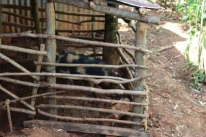 The Water Project: Shisasari Itumbu Community, Mathias Juma Spring -  Pig Pen