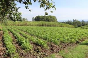 The Water Project: Malimali Community, Onyango Spring -  Farmland