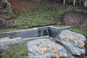 The Water Project: Indulusia Community, Yakobo Spring -  Water Flowing