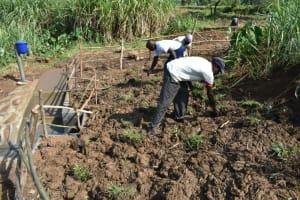 The Water Project: Shitavita Community, Patrick Burudi Spring -  Grass Planting