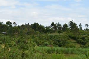 The Water Project: Mundoli Community, Pamela Atieno Spring -  Landscape