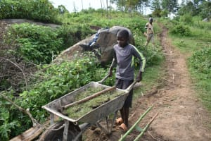 The Water Project: Silungai B Community, Tali Saya Spring -  Bringing Grass For Planting