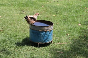 The Water Project: Mukoko Community, Zebedayo Mutsotsi Spring -  Drinking Water For Animals