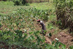The Water Project: Mukoko Community, Zebedayo Mutsotsi Spring -  Mrs Zebedayo Farming