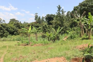 The Water Project: Shivagala Community, Alois Chiedo Spring -  Banana Plantation
