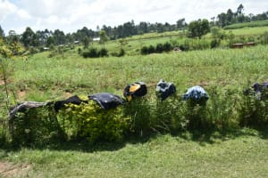 The Water Project: Malanga Community, Malava Housing Spring -  Clothes Drying On Bushes