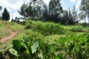 The Water Project: Malanga Community, Malava Housing Spring -  Community Landscape