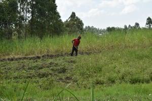 The Water Project: Malanga Community, Malava Housing Spring -  Farming