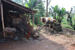The Water Project: Shianda Community, Panyako Spring -  Animal Pen