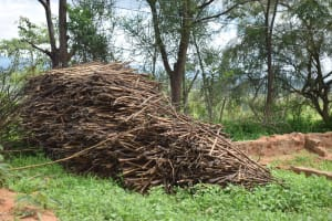The Water Project: Lema Community A -  Firewood