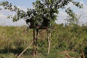 The Water Project: Nsamya Nusaff II Well -  Chicken Coop