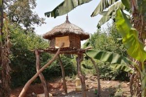 The Water Project: Rwenziramire Community -  Chicken Coop