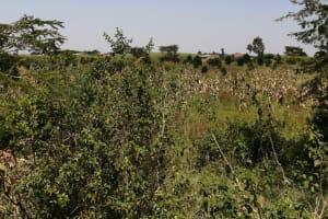 The Water Project: Rwenziramire Community -  Farmland