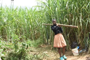 The Water Project: Musango Commnuity, Wabuti Spring -  Girl Carrying A Fencing Pole