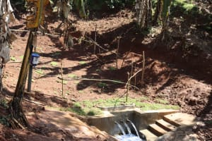 The Water Project: Shihome Community, Peter Majoni Spring -  Protected Peter Majoni Spring