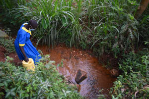 The Water Project: Gimomoi Primary School -  Collecting Water From An Open Source