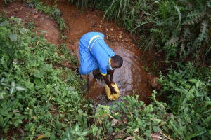The Water Project: Gimomoi Primary School -  Fetching Water From An Open Source
