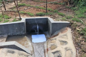 The Water Project: Mukhungula Community, Mulongo Spring -  Clean Water Flows