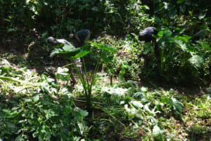 The Water Project: Shihome Community, Peter Majoni Spring -  Site Clearance