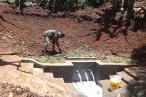 The Water Project: Shihome Community, Peter Majoni Spring -  Grass Planting