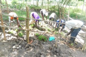 The Water Project: Shianda Township Community, Olingo Spring -  Planting Grass In The Catchment Area