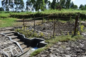 The Water Project: Machemo Community, Boaz Mukulo Spring -  Grass And Live Fence Planted Above Catchment Area