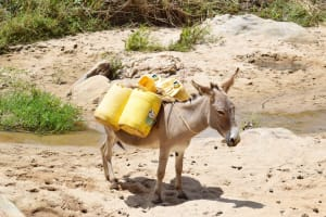 The Water Project: Nduumoni Community C -  Donkey Carries Water Containers