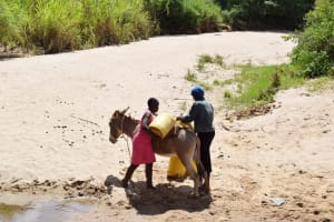 The Water Project: Nduumoni Community C -  Loading Up Donkey With Water Containers