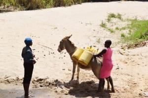 The Water Project: Nduumoni Community C -  Loading Up Donkey With Water