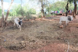 The Water Project: Kitile B Village Well -  Animal Pen