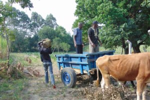 The Water Project: Makhwabuyu Community, Sayia Spring -  Delivering Large Stones To Spring Site