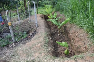 The Water Project: Shianda Community, Panyako Spring -  Well Dug Cutoff Drainage With Planted Bananas
