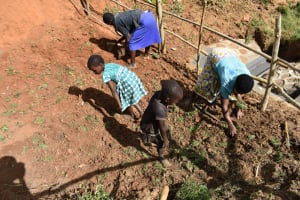 The Water Project: Maraba Community, Shisia Spring -  Planting Grass Above Catchment Area