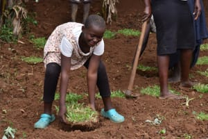 The Water Project: Mukhonje B Community, Peter Yakhama Spring -  Grass Planting