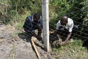The Water Project: Makhwabuyu Community, Sayia Spring -  Fencing