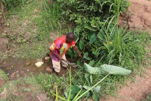 The Water Project: Shianda Community, Panyako Spring -  Site Clearance