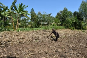 The Water Project: Shivagala Commmunity, Wekoye Spring -  Wilbroda Working On The Farm