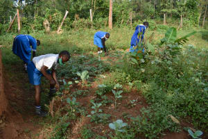 The Water Project: Itabalia Primary School -  Students In The School Farm