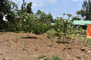 The Water Project: Ebukuya Special School for the Deaf -  Kitchen Garden