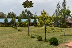 The Water Project: Salvation Army Matioli Secondary School -  Decorative Trees And Bushes