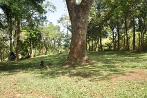 The Water Project: Emusaka Community, Manasses Spring -  Yard In A Home Compound