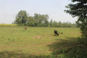 The Water Project: St. Stephens ACK Eshiakhulo Secondary School -  Surrounding Landscape